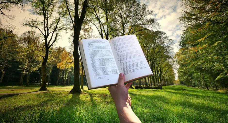 Strom, kniha a zase strom